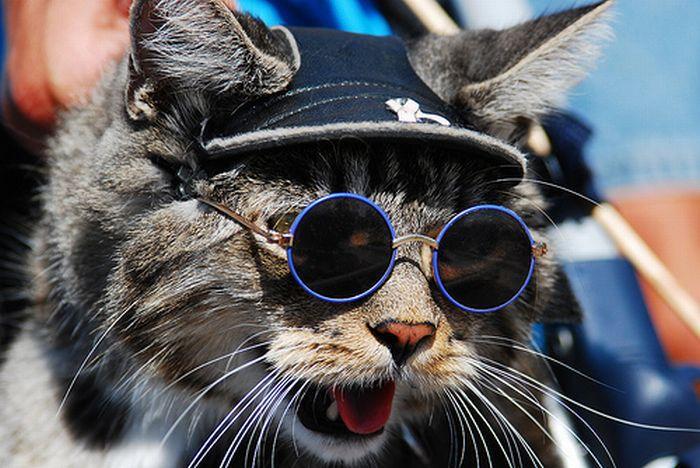 Кошки и очки