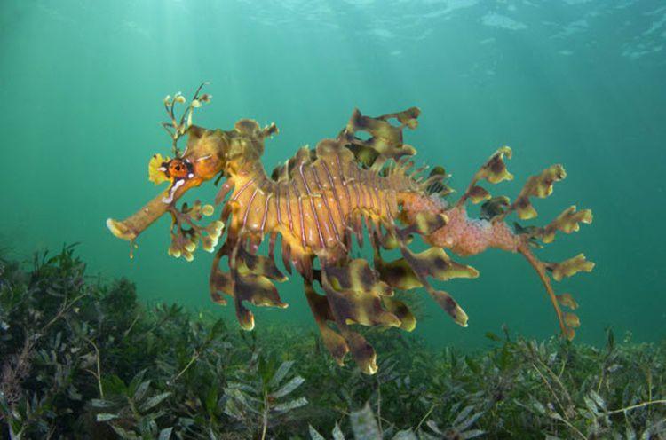 Удивительные фото подводного мира