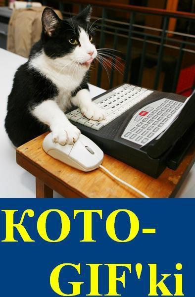 Кото-GIF'ki