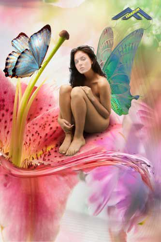 Шаблон для фотомонтажа Бабочки