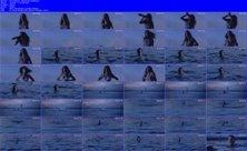http://i2.imageban.ru/out/2011/10/09/13371ac68dce78d4b046c79c377d0151.jpg