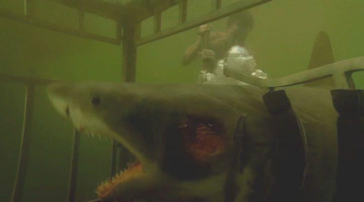 ������� 3D / Shark Night 3D (2011) DVDRip | ��������