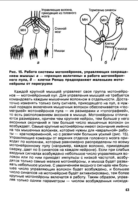 ebook Subpulmonic Ventricular Septal Defect: Proceedings of the Third Asian Congress of