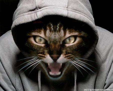 Фильм ужасов про кошек