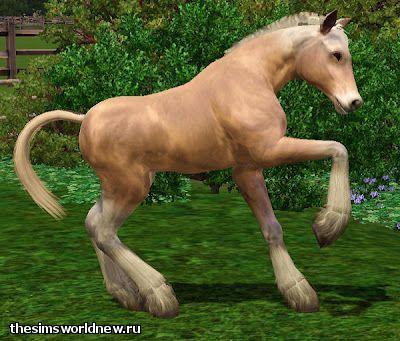 foal5.jpg