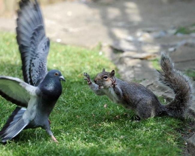 Большая позитивная подборка забавных фотографий  животных
