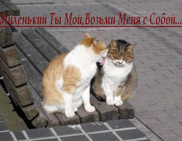 04479-31_podborka_9-cats_firefun_ru.jpg