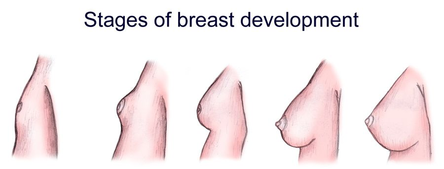 Developing Breasts 37