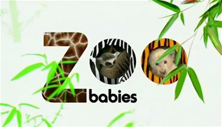 Бэби-бум в зоопарке / Zoo babies (01-04) (Микаела Страчан) [2008, документальный, животные, познавательный, SATRip] [Dub]