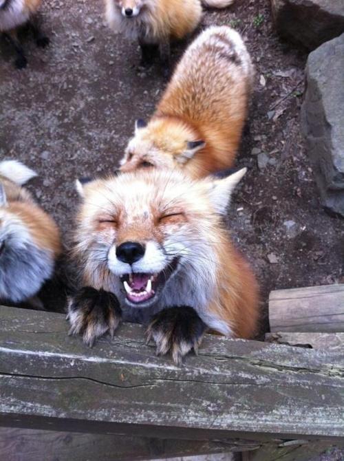 Забавные и позитивные фотографии животных