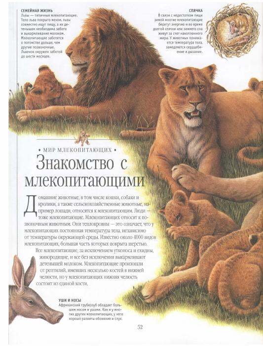 http://i2.imageban.ru/out/2013/09/08/55b7adb4dab1d3e1c64804b87fa2ad82.jpg
