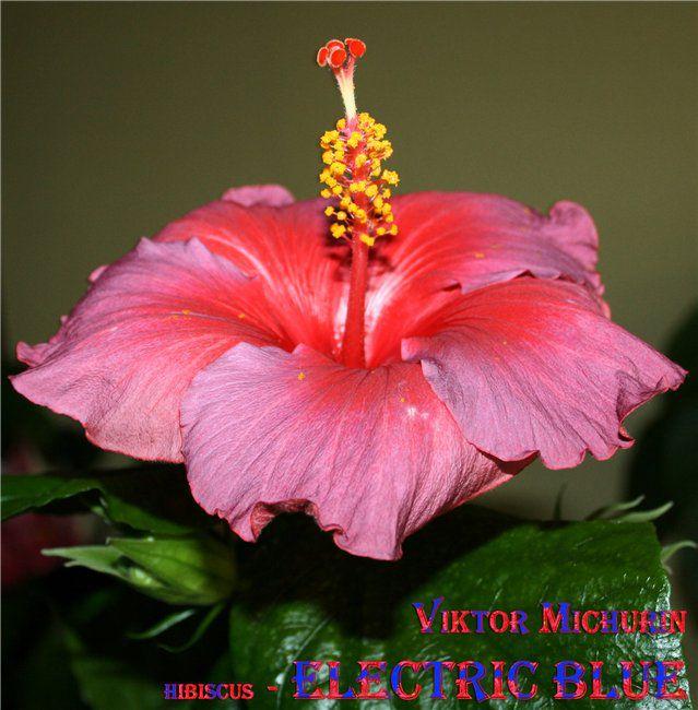 http://i2.imageban.ru/out/2013/09/19/c6b8392cb1c4403e2ade1c0e53d24af5.jpg