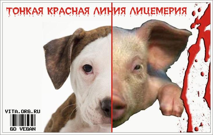 tonkaya_krasnaya_liniya.png
