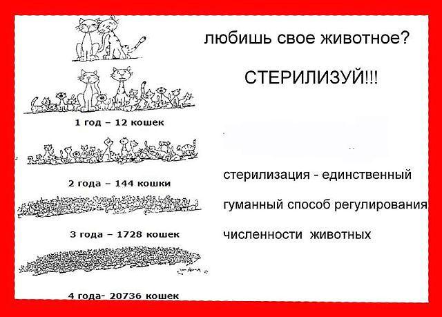 Плакат о важности кастрации1.jpg