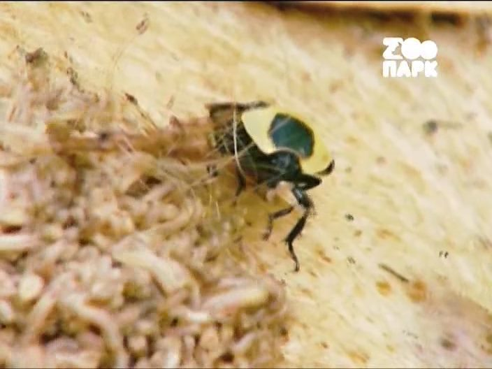 ��� ��������� ��������� / Insects from Hel [01-04] (2004/SATRip) �� HitWay | P1