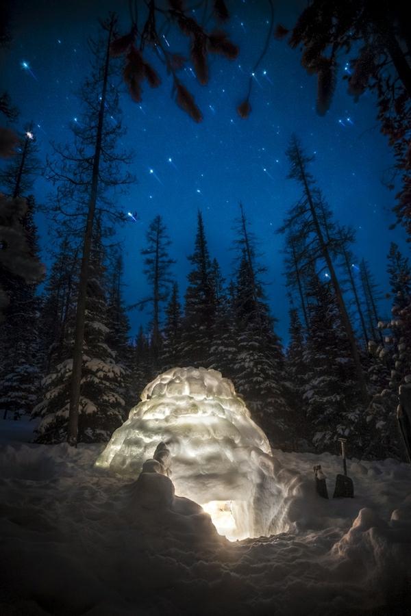 Зимняя ночь в лесу 1