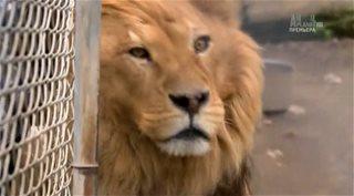 Animal Planet. Джунгли Северной Америки / Yankee jungle [1-3 серии из 3] (2014) HDTVRip от GeneralFilm