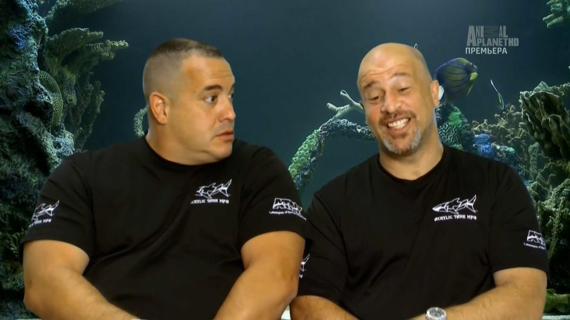 большим аквариумный бизнес 1 серия ножи ворсменских кузнецов