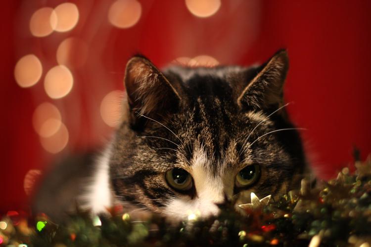 Праздничный котейка 1