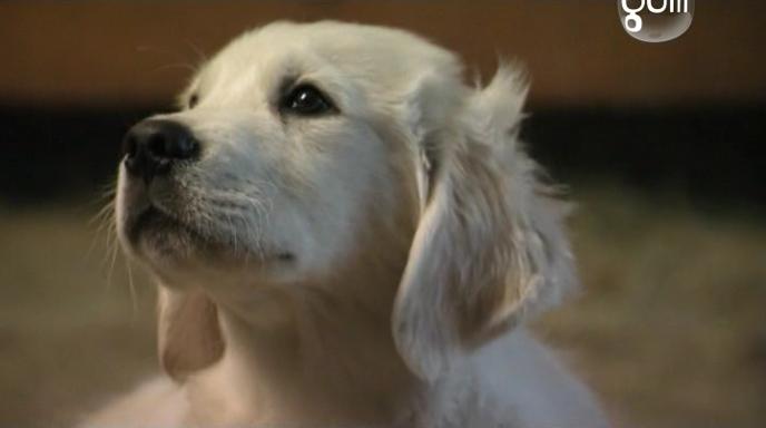 ����������� �����: ���������� ����� / Adventures of Bailey: The Lost Puppy (2010) SATRip