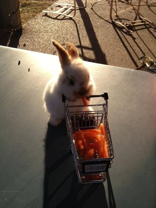 Крольчонок пошел за покупками