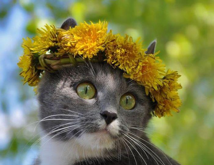 Весенний котейка 1