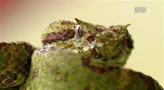 Animal Planet. ����� ������� ���� � ��������� �������� / Ten Deadliest Snakes with Nigel Marven [1 �����] (2014) HDTVRip �� GeneralFilm