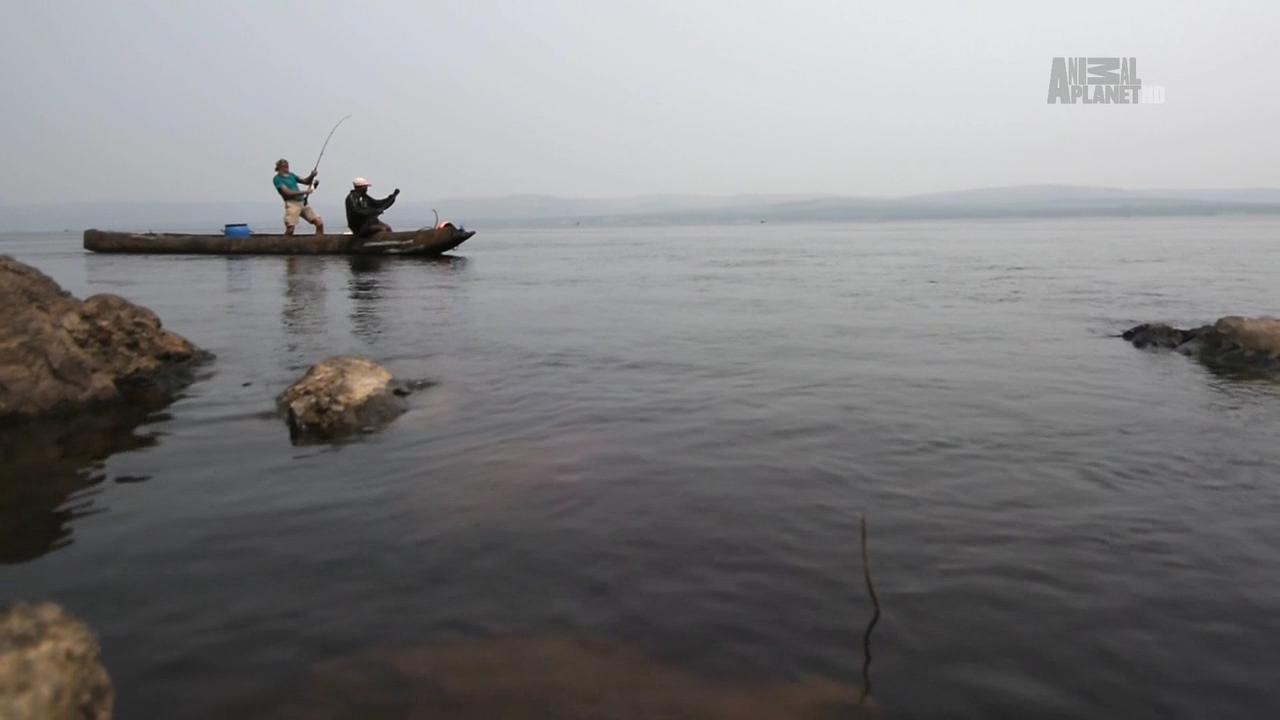 Терапон. Африканская пиранья / Tigerfish. Africa's Piranha (2014) HDTVRip 720p