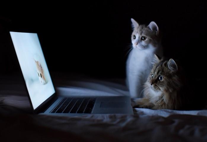 Котейки за ноутом