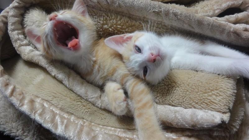 Сонные котейки