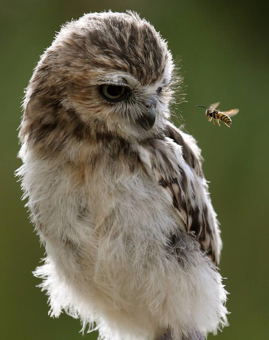 Полет осы