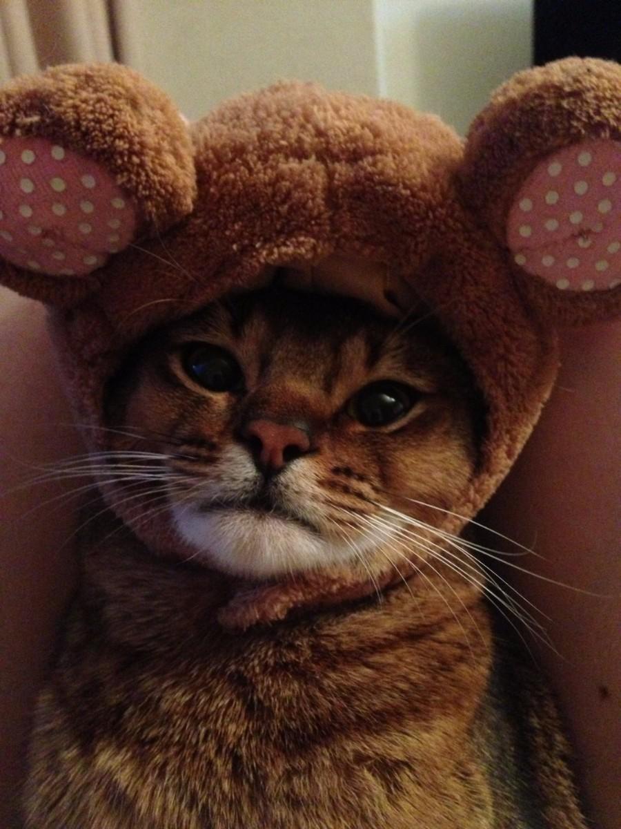 В шапочке мишки