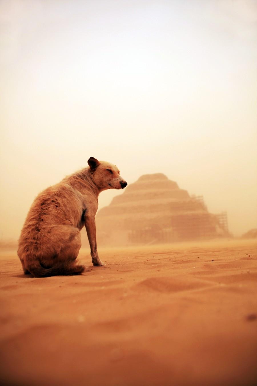 В песках на фоне пирамид