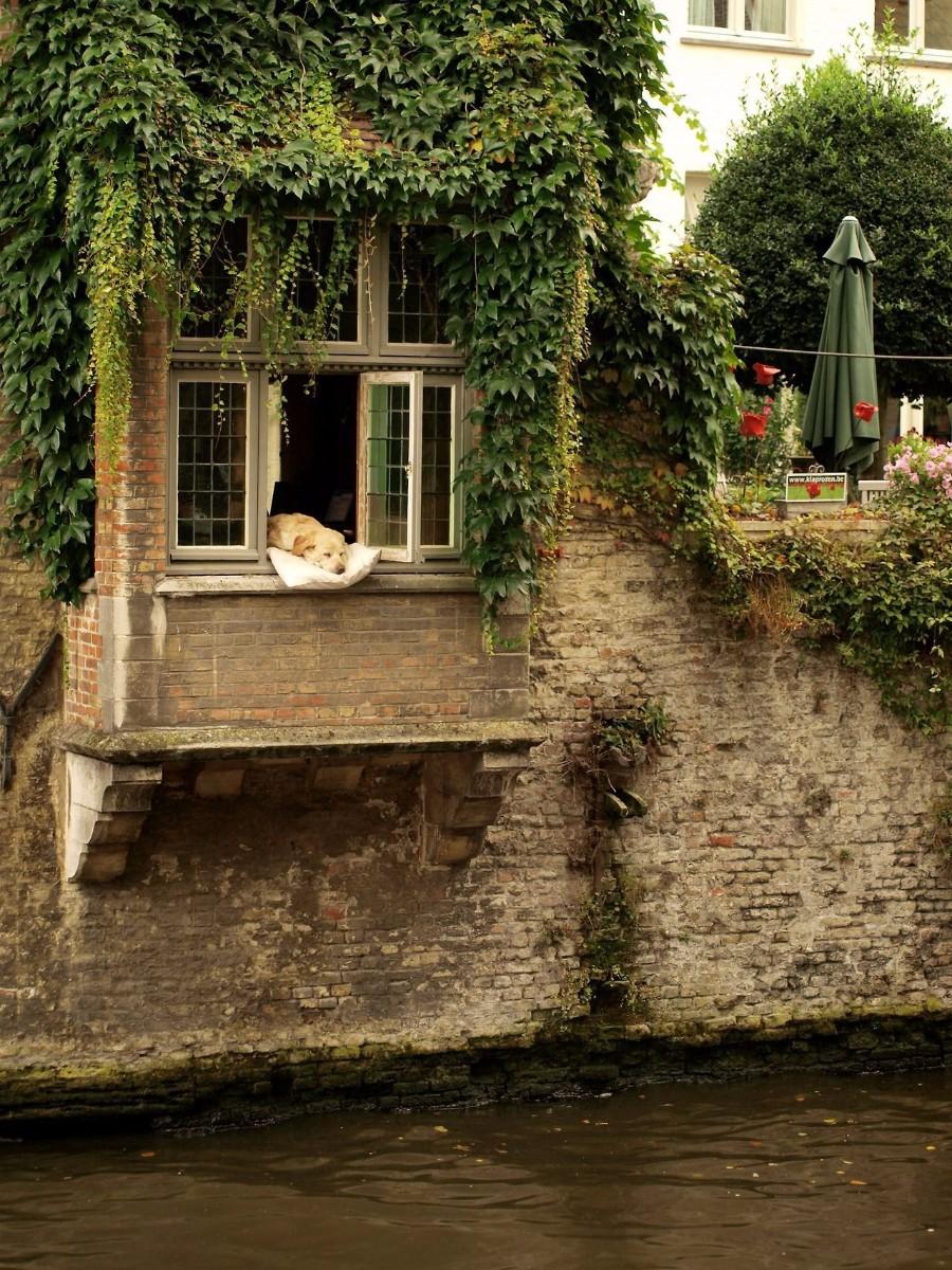 Отдых на окне