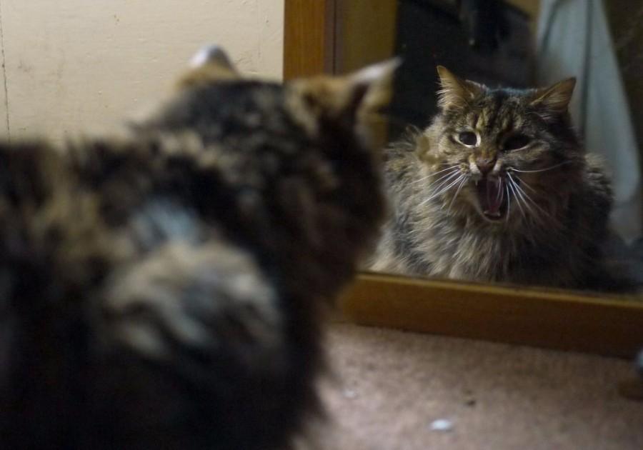 Зевок перед зеркалом