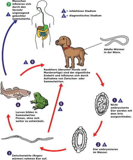 Was von den Würmern beim Kater zu machen