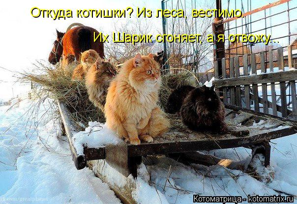 Небольшая котоматрица на Старый Новый год