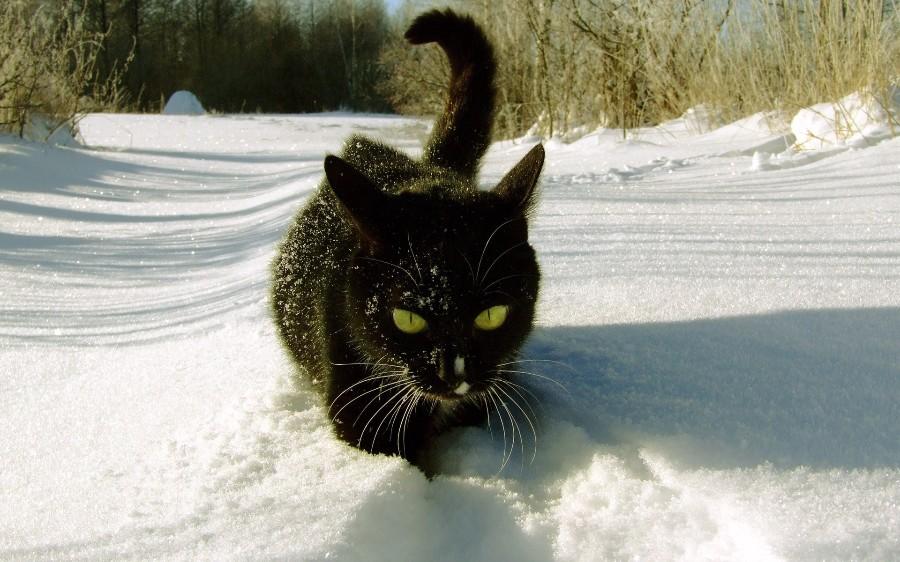 Черный в снегу