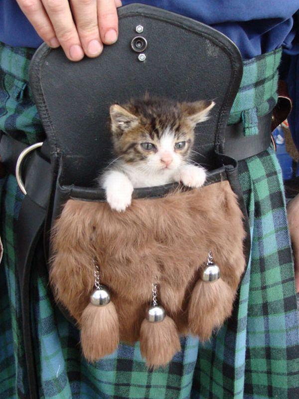 Кармашек для котейки 1