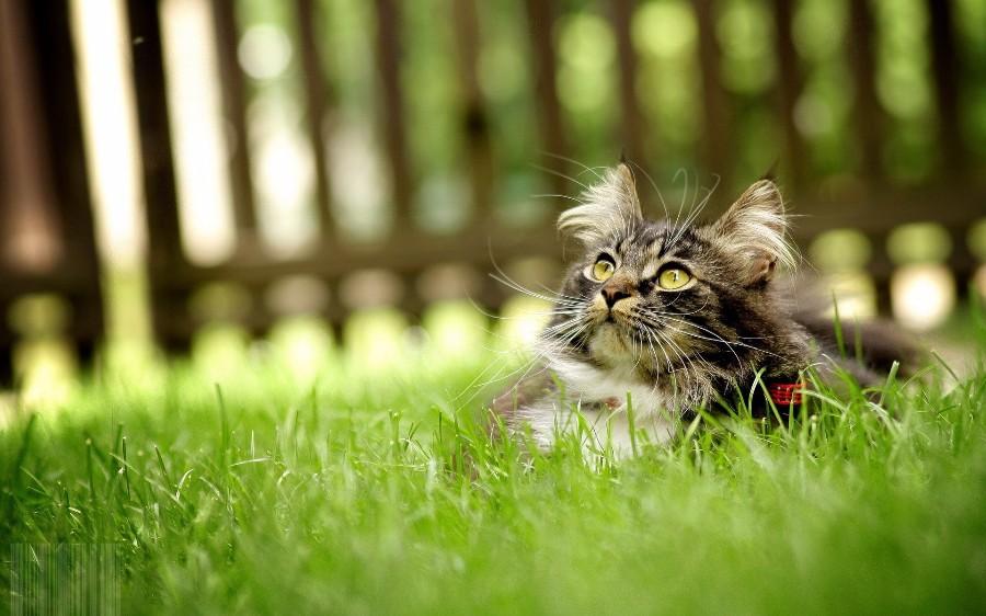 Котейка на прогулке