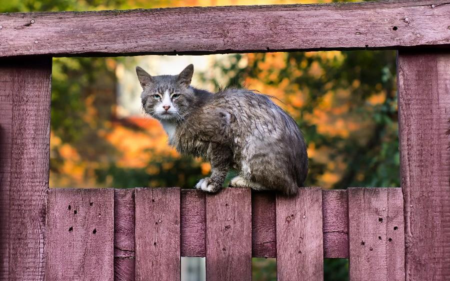 Дворовый суровый котейка