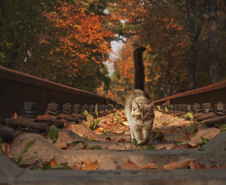 Котейка на шпалах