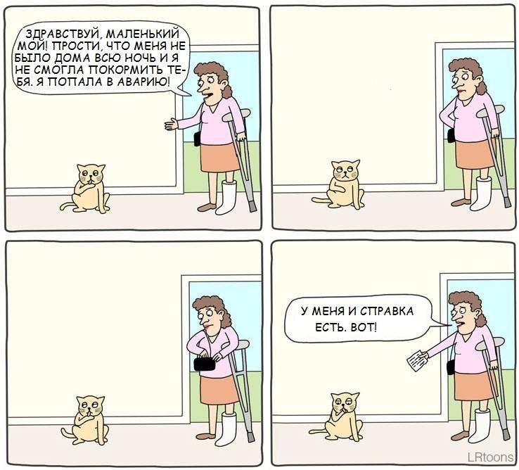 Прощение котика