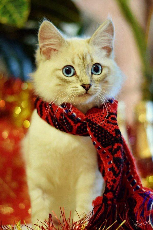 Праздничный котейка