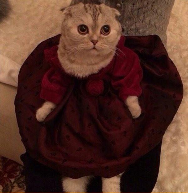 Просто кошка в платье