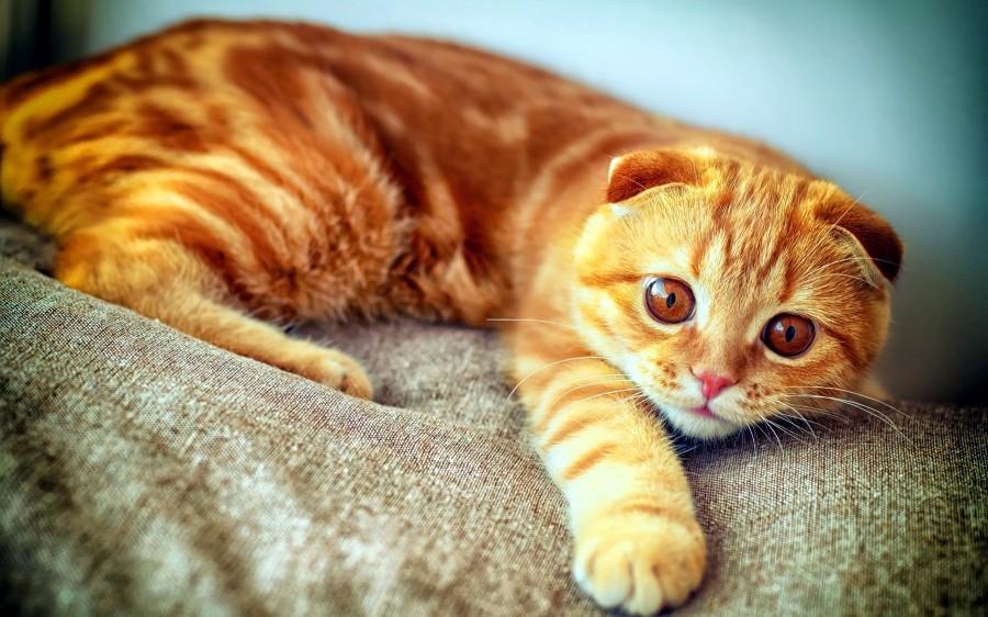 Рыжий котейка