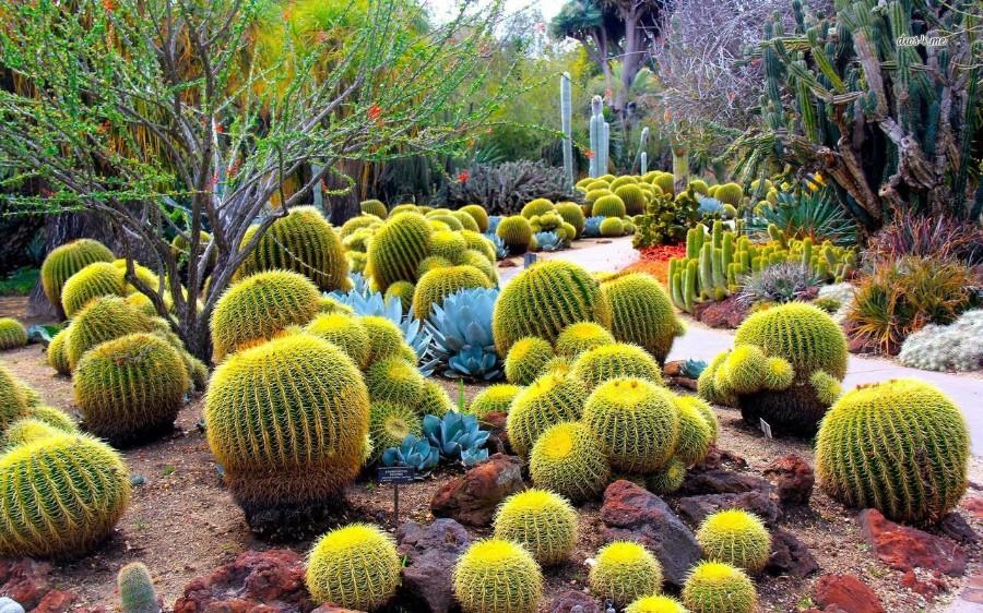 Полянка с кактусами
