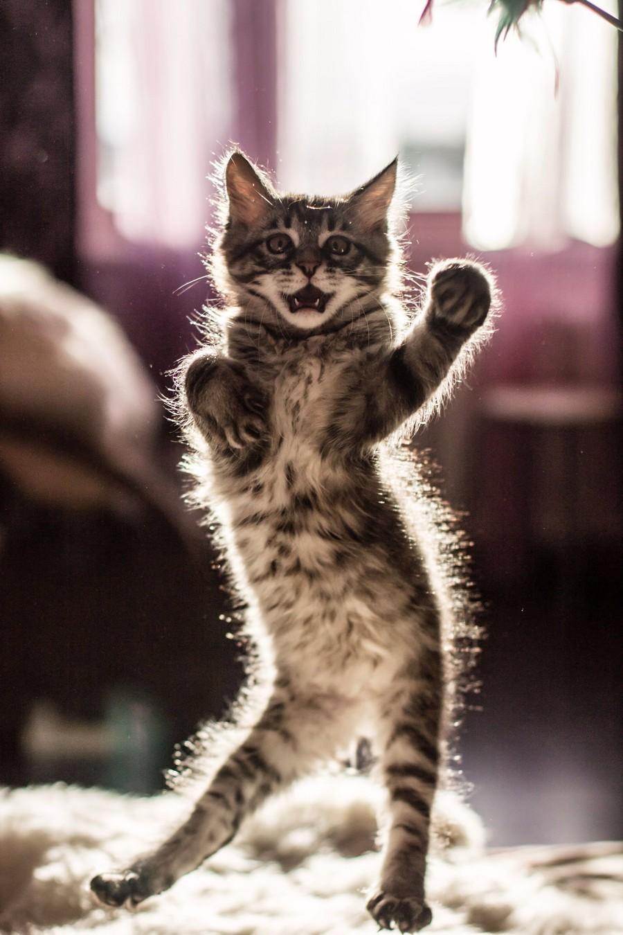 Грациозный котейка