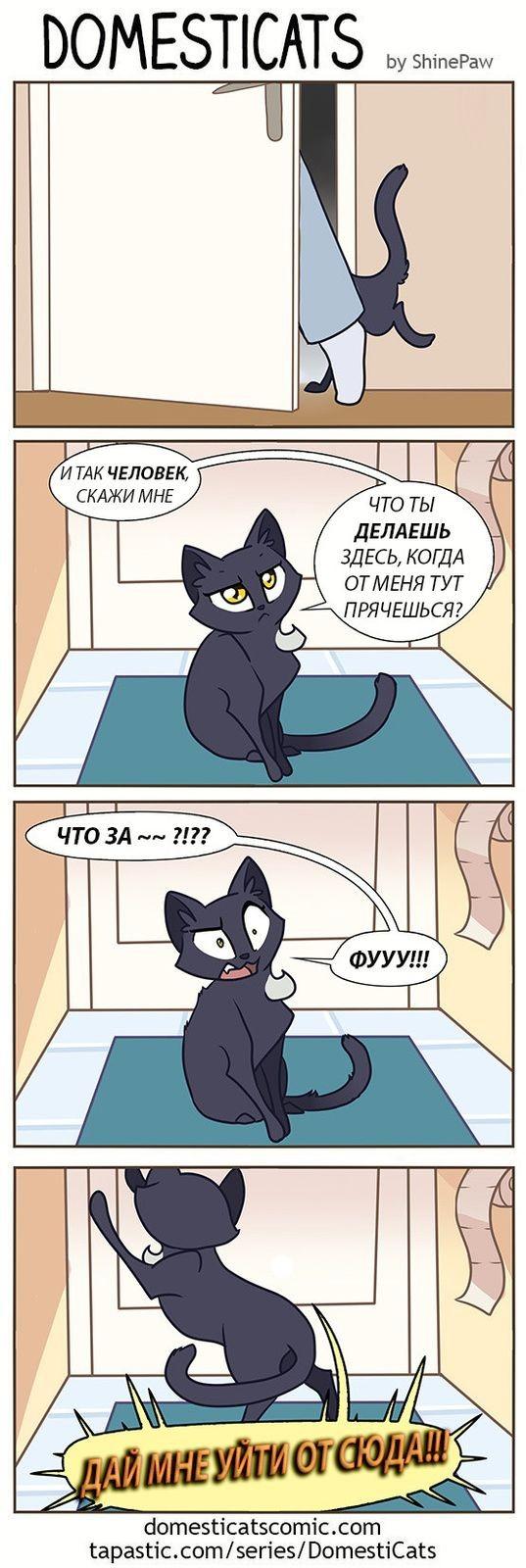 Кот в туалете