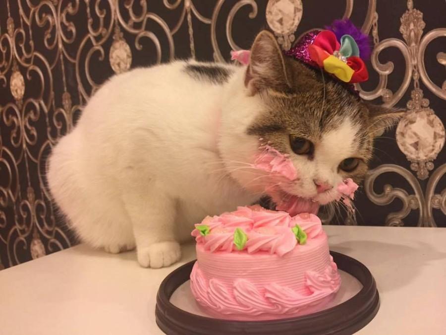 Тортик для котейки
